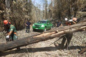 Incendi, già al lavoro i 25 carabinieri forestali arrivati in Sicilia da altre regioni italiane