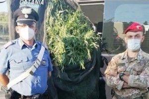 Fiumefreddo di Sicilia, vivaista 52enne coltivava anche 300 piantine di cannabis: arrestato assieme a 36enne