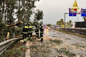 Maltempo, a Catania e in provincia alberi sradicati: in via S. Euplio e nell'Asse dei servizi