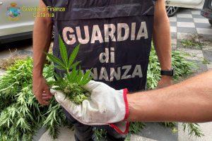 Scordia, scoperta piantagione con 1000 piante di cannabis: arrestati un catanese e un latitante albanese