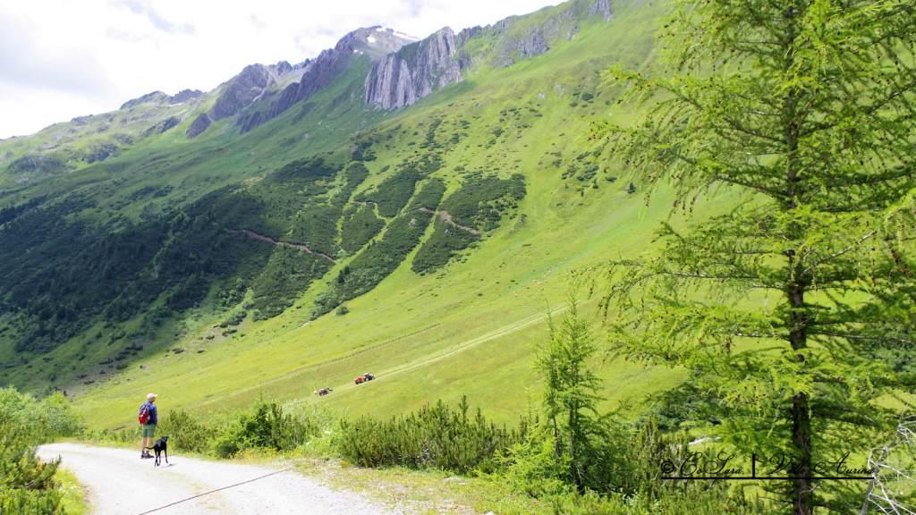 Sul sentiero per la Malga dei Dossi - Riva di Tures