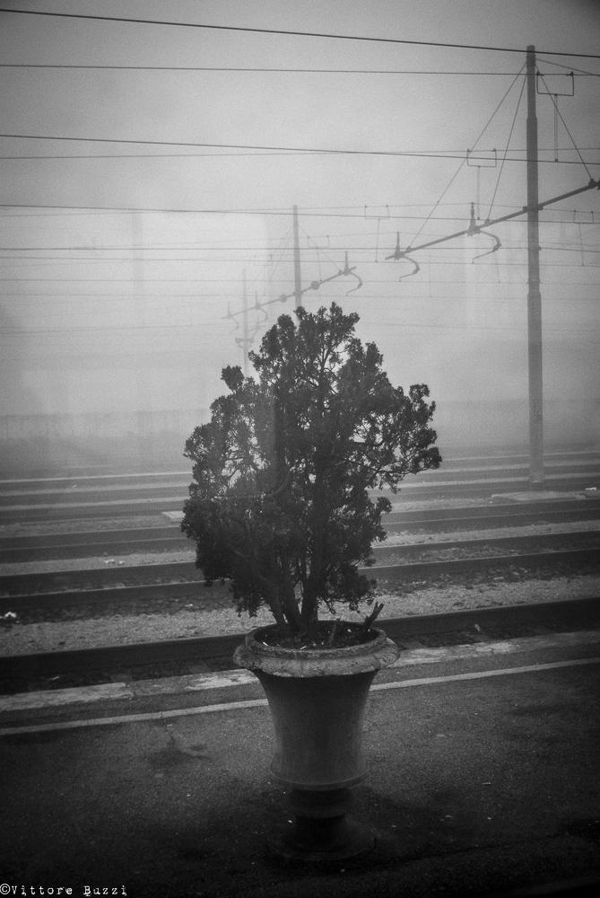 Vittore Buzzi Photography