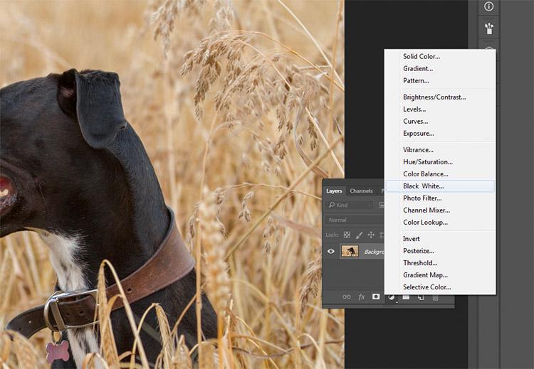 black-and-white-conversions-in-photoshop-blackandwhitelayer-method