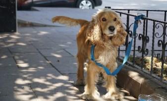 Sevimli köpek böyle bulundu