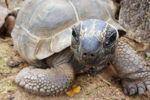 turtle-1028026_1920