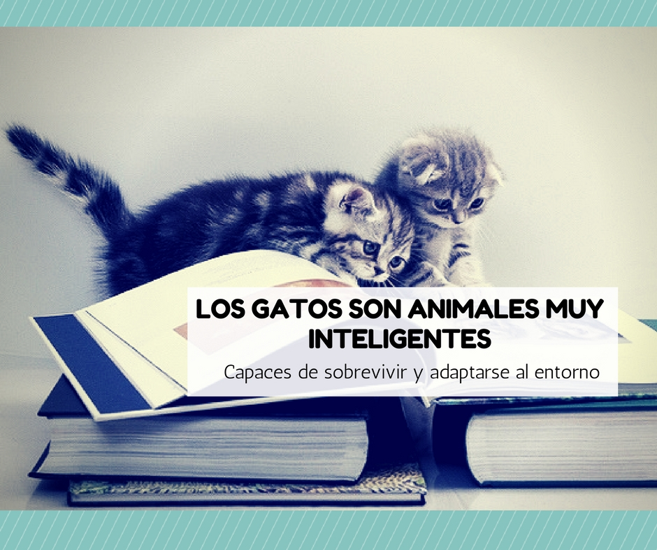 gatos inteligentes