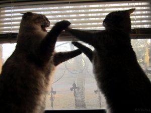 Si dos gatos macho se encuentran merodeando a la hembra en celo, la pelea está servida | Foto: shrimpcookie.deviantart.com