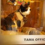 La oficina que ocupa Tama con su bandeja de arena | Foto: www.japonpop.com