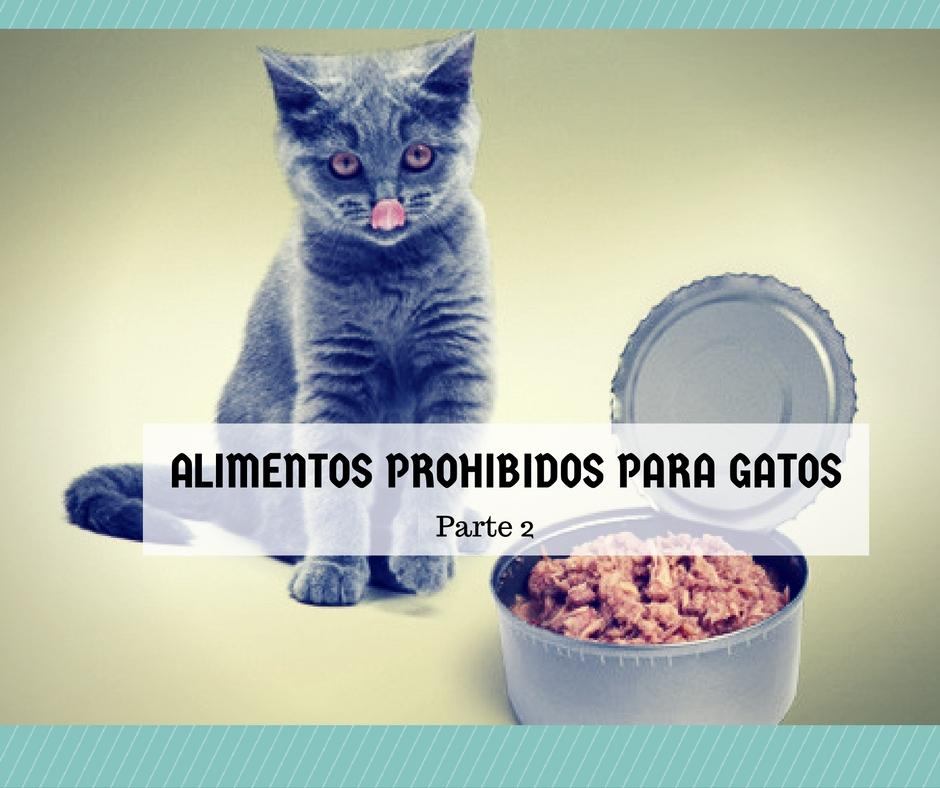 alimentos prohibidos gatos 2