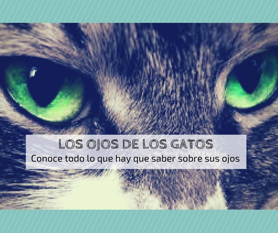 ojos gatos