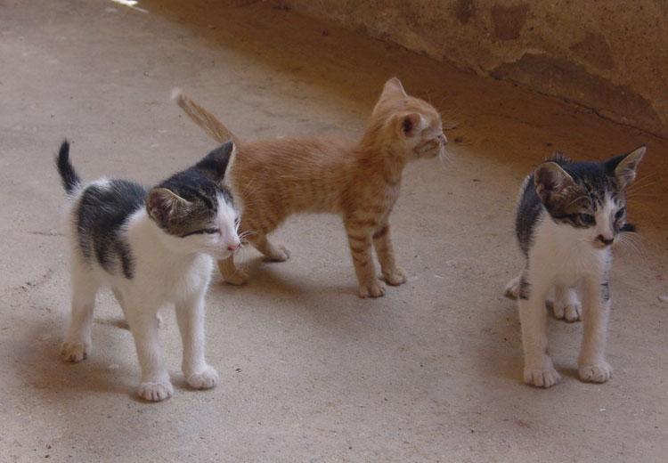 Gata El Cuidado Del Cuerpo: El Color De Los Gatos, Pura Genética Felina