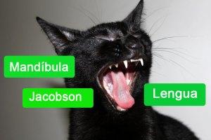 Mandíbula, dientes, lengua y órgano de Jacobson de los gatos | Foto: www.cosasdegatos.es