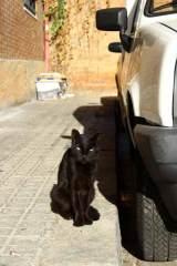 Gato callejero de una colonia controlada