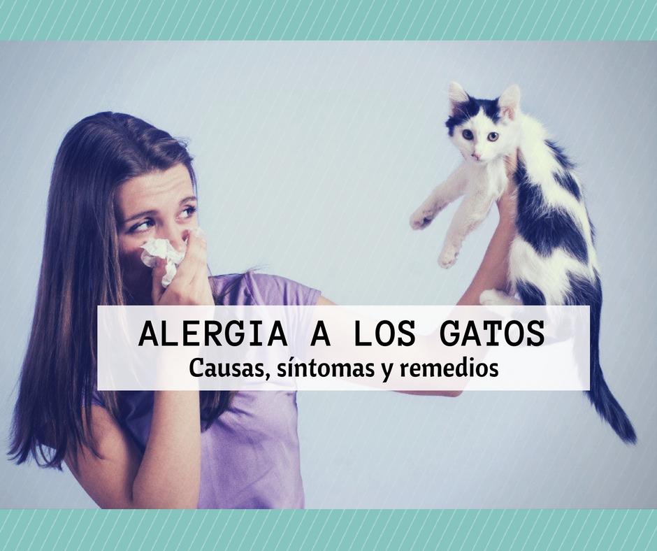 alergia gatos causa sintomas remedio