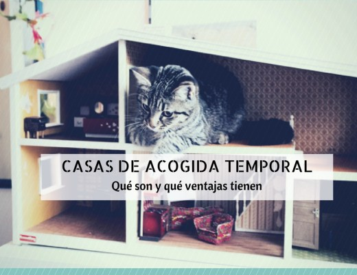 casa acogida gatos temporal