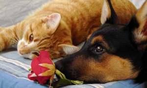 Muchos perros y gatos conviven en perfecta armonía | Foto: akinna.deviantart.com