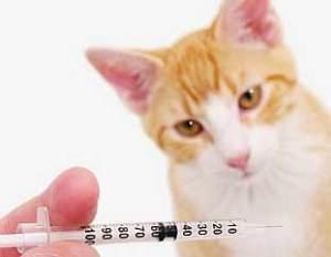 Calendario de vacunación del gato