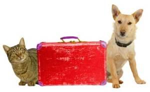 Infórmate de las condiciones de viaje de mascotas de tu compañía aérea o tren   Foto: edreams