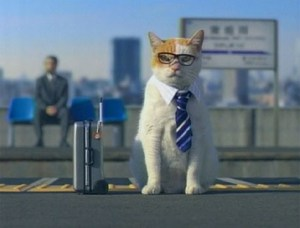 Consejos para viajar con gatos | Foto: http://www.japanprobe.com