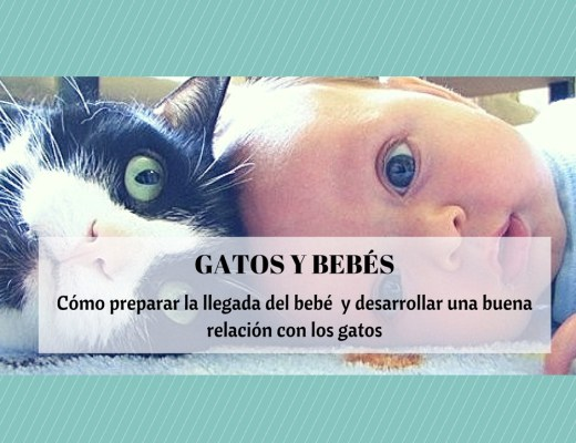 gatos y bebes humanos