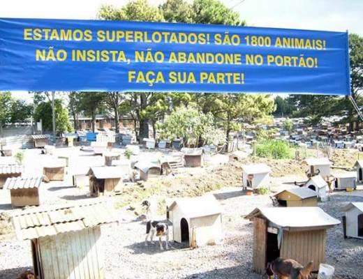 Más de 1.800 perros y gatos viven en las casetas de la Favela de los Cachorros en Caxias do Sul | Foto: Asociación SOAMA