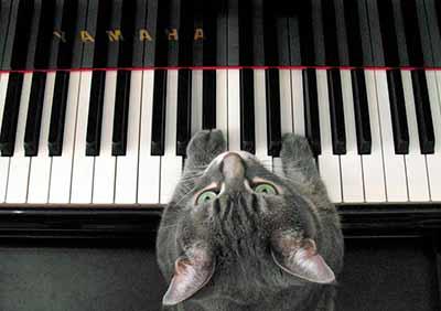 Nora empezó a tocar el piano sola, cuando tenía un añito | Foto: norathepianocat.com