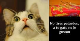 Los gatos pueden reaccionar con miedo frente al ruido de los petardos