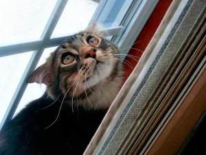 Sigue estos consejos para evitar que tu gato pase miedo con los petardos | Foto: axel713.deviantart.com