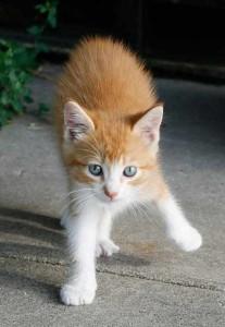 No dejes que tu gato salga en San Juan o fin de año, los petardos podrían hacerle daño o que él saliera corriendo | Foto: rebelfire.deviantart.com