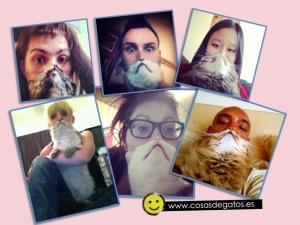 Las fotos más divertidas del gato barba