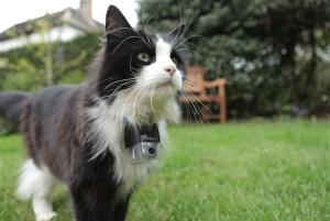 Los gatos disponían de micro cámaras, GPS y sensores de movimiento en el collar | Foto: BBC