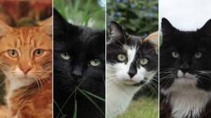 La vida secreta del gato - The Secret Life of the Cat. De la BBC