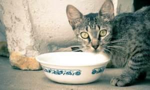 El pienso holístico o de gama alta está más preparado para la óptima alimentación de los gatos | Foto: justineaton.deviantart.com