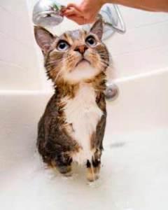 Consejos y pasos a seguir en caso de golpe de calor en el gato