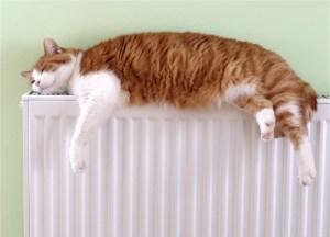 Los gatos buscan el calor de los radiadores | Foto: Google Images