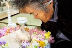 El gato Fukumaru fallece con 11 años