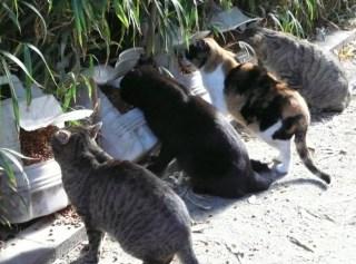 Gatos del jard n bot nico 18 a os cuidando de gatos sin for Ahuyentar los gatos del jardin