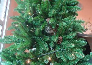 Gato y árbol de navidad