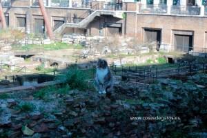 Uno de los gatos del refugio, paseando por las ruinas