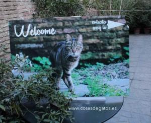 Entrada al Santuario de los Gatos