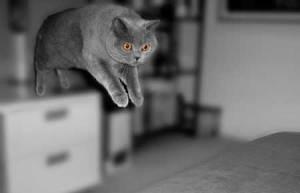 Por qué los gatos caen de pie   Foto: o0jessica0o.deviantart.com