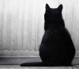 Por qué los gatos se queden mirando fijamente a la nada o a un punto fijo | Foto: odpium.deviantart.com