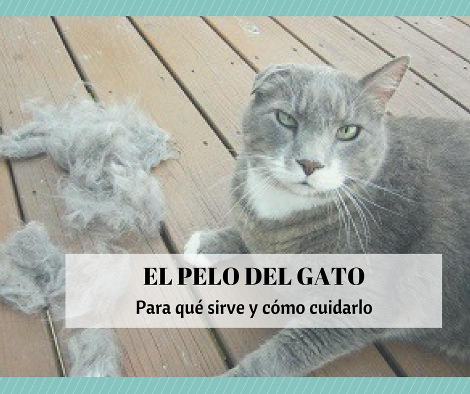 El pelo del gato consejos para su cuidado cosas de gatos - Cuidados gato 1 mes ...