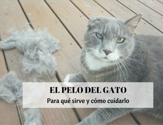 pelo gato