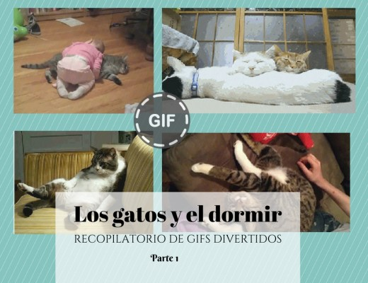 Gifs de gatos durmiendo parte 1