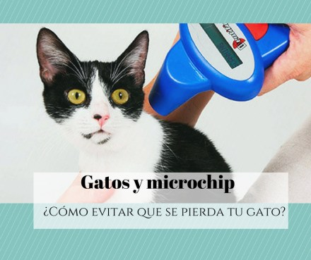 Gatos y microchip identificativo