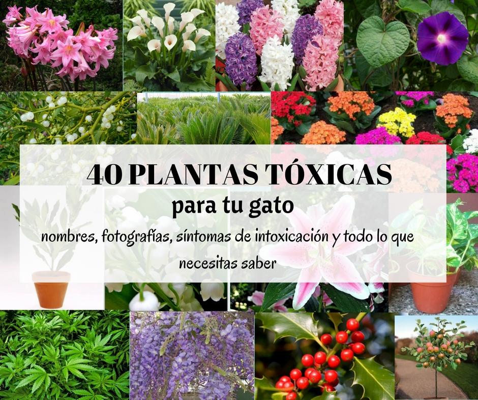 Las 40 Plantas M S Comunes Que Son T Xicas Para Gatos