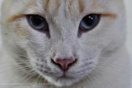 Retrato del bello Kato