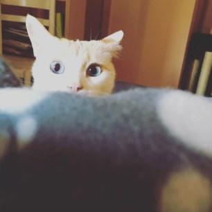 """Kato espiando """"escondido"""""""