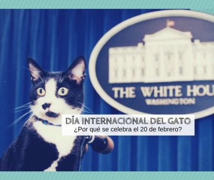 dia internacional gato porque 20 febrero